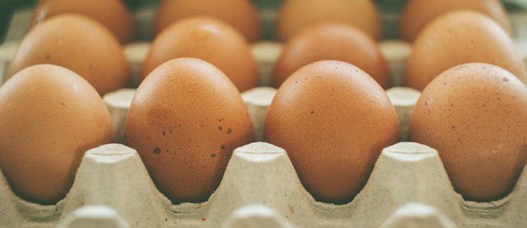 כל מה שרציתם לדעת על ביצים אורגניות